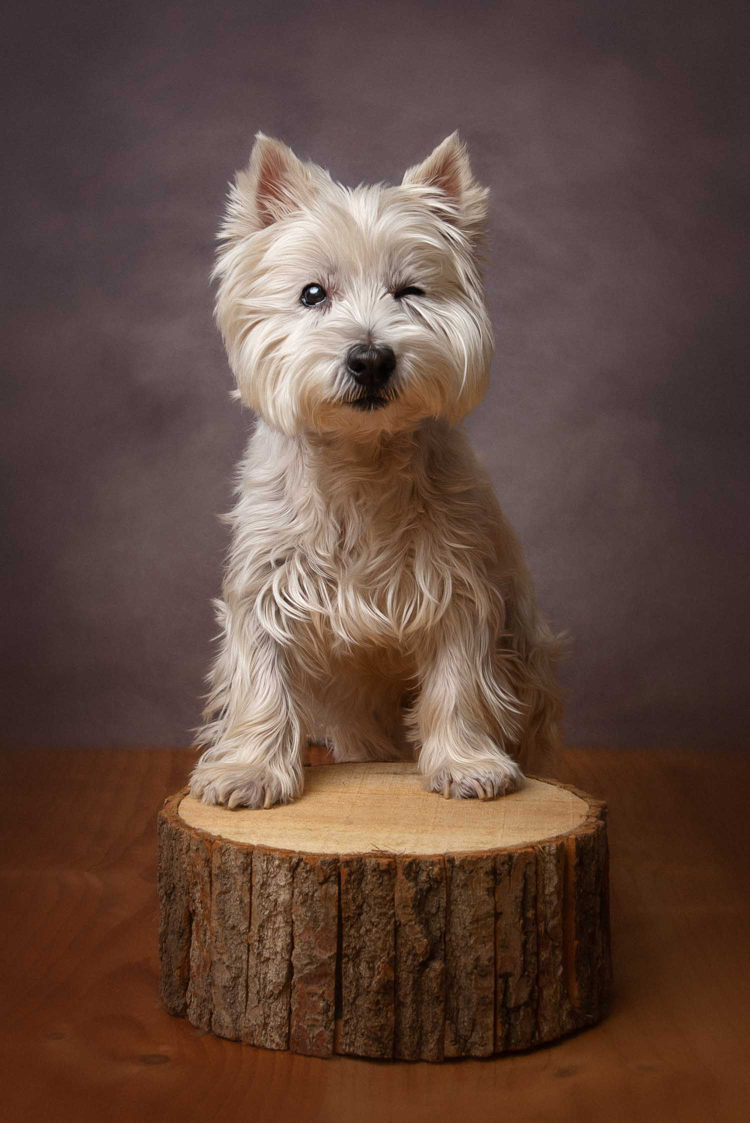 dog photograph by pet photographer siobhan kelly photography
