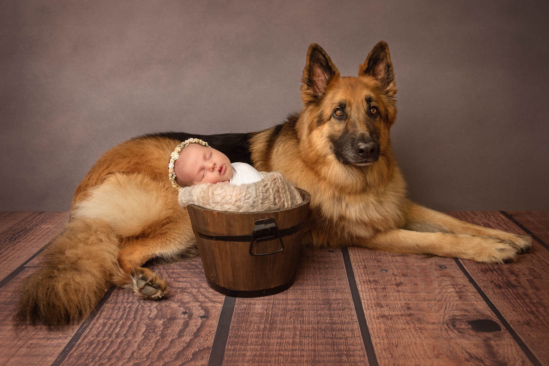 dog and baby photograph by pet photographer siobhan kelly photography
